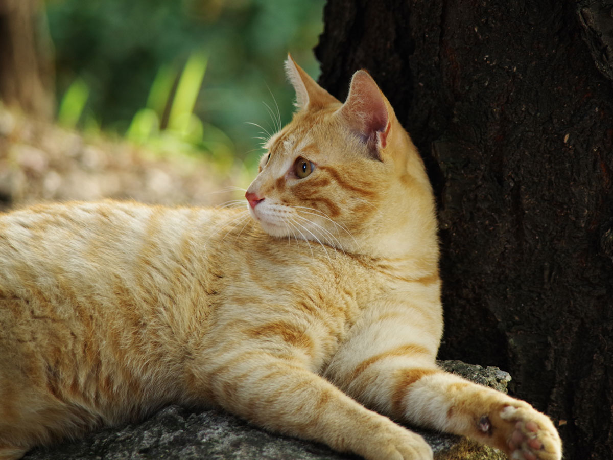 A restihg stray cat with tree