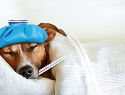 Coughing Up the Facts on Canine Influenza